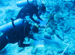 Caribbean Coral Reef Ecosystems Assessment and Monitoring